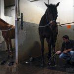 Как лошади завоевали людей: Men's Health работает на конюшне