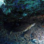 Репортаж с погружением: МН спасает зеленых черепах в Индийском океане
